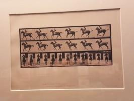Cheval au galop (Muybridge, 1887)